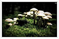 #8289キノコのティンサイン 金属看板 ポスター / Tin Sign Metal Poster of #8289 Mushrooms