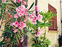 ASTONISH SEEDS:MIXED : 50 Pcs Nerium Seeds Older Flowering Plant Seeds Bonsai Flower Seeds Courtyard & Balcony Outdoor Plant for Home Garden
