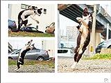 のら猫拳 画像
