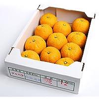 柑橘 ジャバラ 長崎県産 じゃばら 約1.5kg TV雑誌で話題 旬 フルーツ 果物 ジュース スムージー(gn)