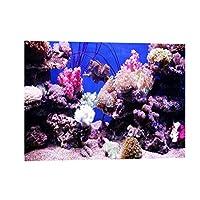 水槽 水族館 魚タンク バックグラウンド 装飾 PVC 背景 3D効果 ポスター 海 サンゴ 30x18cm