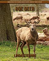 Roe Deer: Amazing Pictures and Facts About Roe Deer
