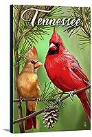 テネシー州–Cardinals–夏 16 x 24 Gallery Canvas LANT-3P-SC-86439-16x24