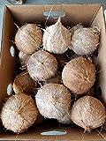 ココナッツ ココナッツ果実 1玉