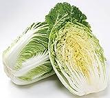 産地直送 九州産 白菜(はくさい) (10株)