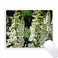 フォックスグローブのフィールドは、白い狐グローブの大きなパッチの写真です。 PC Mouse Pad パソコン マウスパッド