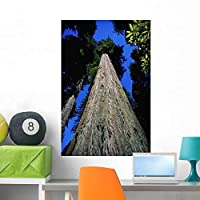 Wallmonkeys Tree Trunk of Coastal Redwood Wall Decal Peel and Stick Graphic WM9558 (36 in H x 24 in W) [並行輸入品]