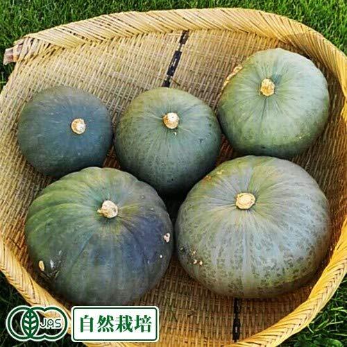 【1月6日より配送再開】東京南瓜 約6kg 有機JAS 自然栽培 (青森県 SKOS合同会社) かぼちゃ ふるさと21