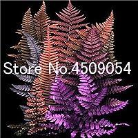 盆栽100個マルチカラー盆栽野菜家の庭の装飾のためにSeedss屋外盆栽鉢の花:10