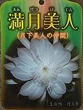 【花なし・開花見込み株】月下美人の仲間 交配種 孔雀サボテン 満月美人(5号)
