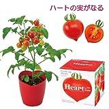 [ギフトに]ハートの実がなるハートマト栽培セット:種から育てるミニトマトの栽培セット(ラッピング付) ノーブランド品