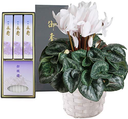 お供え 生花 シクラメン 鉢植え 白 日本香堂 お線香 ローソクフラワーギフト 花 セット