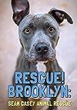 Rescue Brooklyn [DVD] [Import]