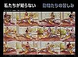 ナショナル ジオグラフィック日本版 2019年6月号 画像