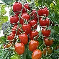 種子パッケージ:発芽SEEDS PLATFIRM-10バレンタインハイブリッドトマトの種子