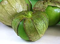 発芽SEEDS:50 - 種子:トマティロヴェルデ - GREATサルサ!!、モグラ!!、ソース、ジャムを作ります