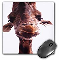 3drose LLC 8x 8x 0.25インチマウスパッド、本当にかわいいキリン面(MP 62416_ 1)