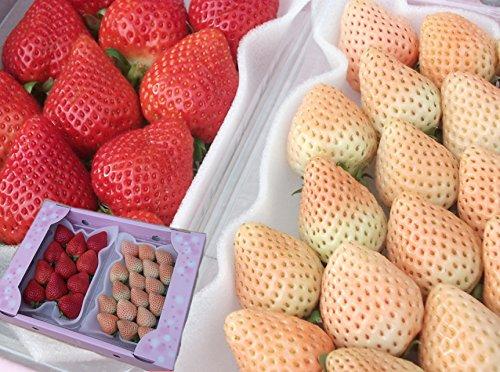 南国フルーツ 福岡産 紅白いちご あまおう&淡雪 2パック (各1パック)