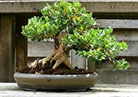 Portal Cool Bonsai Seeds Rare Red Cactus Potted Flowers Home Garden Room Decor Hobby Pot Art
