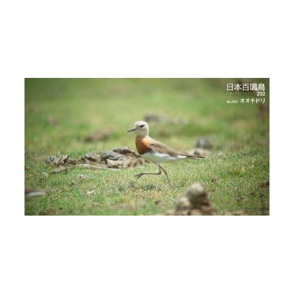 シンフォレストBlu-ray 日本百鳴鳥 20...の紹介画像6