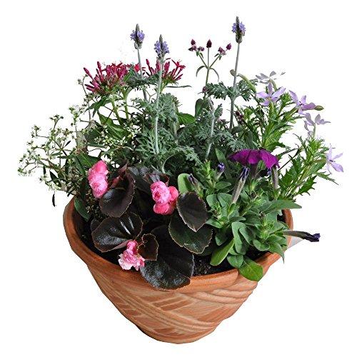季節の鉢植え 常滑焼き陶器鉢(8号鉢・茶) 雛壇タイプ
