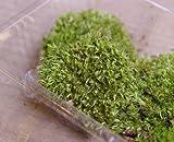 盆栽作りや苔盆栽作りに使える【山苔 ヤマゴケパック】