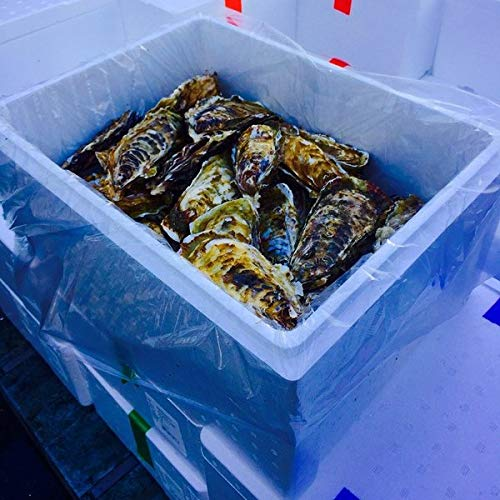 殻付きカキ 殻付牡蠣 カキ 生鮮 加熱用 宮城県産 三陸産 4K入り