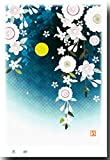 花のポストカード 「夜桜」 桜絵葉書 和道楽