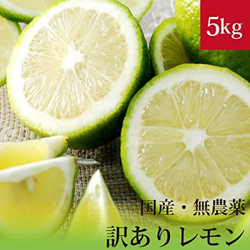 訳ありレモン5kg 無農薬・無化学肥料 国産 神奈川県小田原産