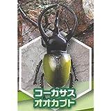 甲虫王国ムシパラダイスフィギュア [5.コーカサスオオカブト](単品)