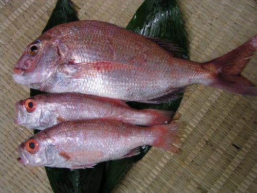 瀬戸内海産の天然鯛800gと、赤むつ(のどぐろ)200gが2尾