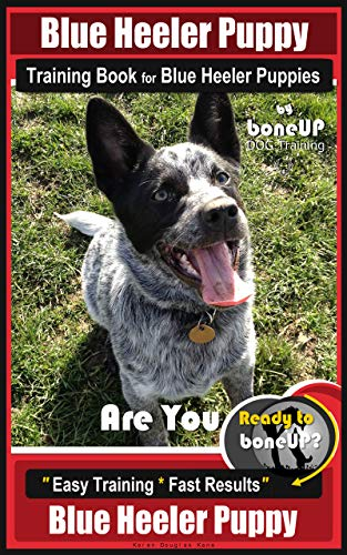 Blue Heeler Puppy Training Book for Blue Heeler Puppies By BoneUP DOG Training: Are You Ready to Bone Up?  Easy Steps * Fast Results Blue Heeler Puppy 1