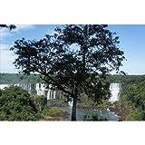 ブラジルパラナ州フォス・ド・イグアスの滝のポストカード photo by 渡辺貴之 絵葉書ハガキはがき