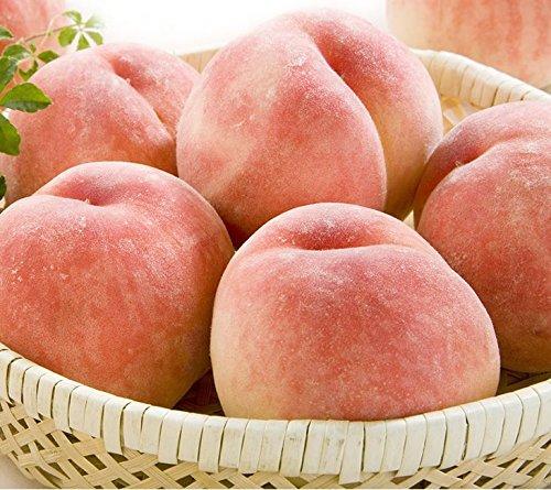 山形県産 訳あり 桃 白桃 もも (品種おまかせ) 約2kg f15
