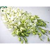 デンファレ 白 生花 切り花 シンガポールホワイトなど5本