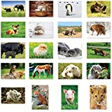 赤ちゃん動物ポストカードはがき20のセット。動物赤ちゃんポストカードVariety Pack。Made In USA。