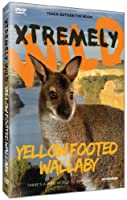 Yellow Footed Wallaby [DVD] [Import]