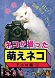 ネコが撮った『萌えネコ』写真集 / ニャン画:子ネコ編 ?: はい!目線ちょーだい (22世紀アート)
