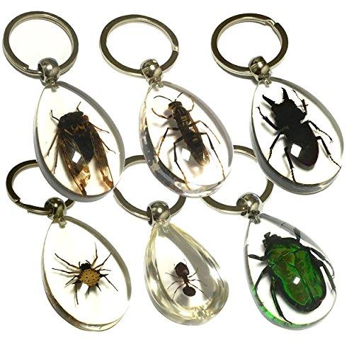 昆虫キーホルダー セット 昆虫標本 本物 昆虫 キーホルダー アクセサリー 蟲 虫キーホルダー 昆虫グッズ 昆虫セット 甲虫 アソート (全6種)
