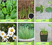 SEED SEEDシードによって種子コンボレモンバーム、アスパラガス、レモンバジル、ドイツChamoe、タイム英語冬、チャイブ種子コンボパック(パケットあたり1)を成長させることが簡単に