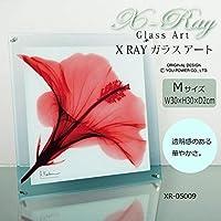 X RAY ガラス アート レッド ハイビスカス Mサイズ XR-05009