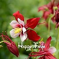 家庭菜園の作付けのための100ヤグルマギクポルカドットヤグルマギクCyanusバルク花の種子ヤグルマギクの種子