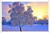 冬の雪霜の木木日79425のティンサイン 金属看板 ポスター / Tin Sign Metal Poster of Winter Snow Frost Tree Trees Sun 79425