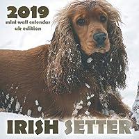 Irish Setter 2019 Mini Wall Calendar (UK Edition)