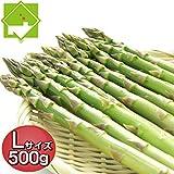 アスパラ 北海道富良野産 ハウス栽培 グリーンアスパラ Lサイズ 500g