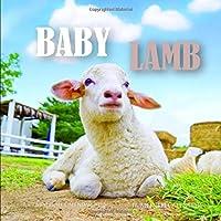 Baby Lamb 7 x 7 Mini Wall Calendar 2020: 16 Month Calendar