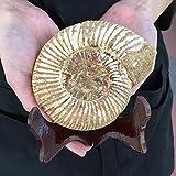 財運を高める【マダガスカル産】 アンモナイト 化石 ペリスフィンクテクス 358g 【台付き】 638G