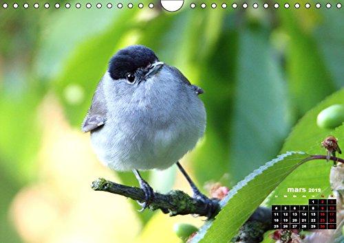 Oiseaux du Patis 2019: Oiseaux du parc naturel du Patis a Meaux au gre des saisons (Calvendo Animaux)