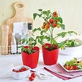 ハートの実がなるハートマト栽培セット[種から育てるミニトマトの栽培セット]