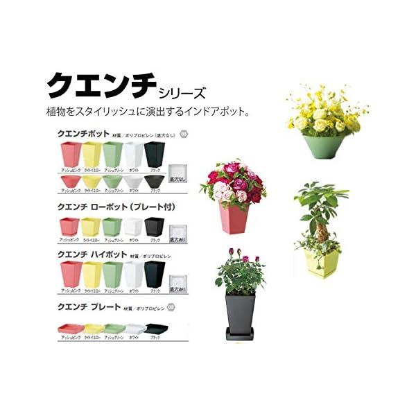 大和プラスチック 鉢・プランター クエンチロー...の紹介画像4